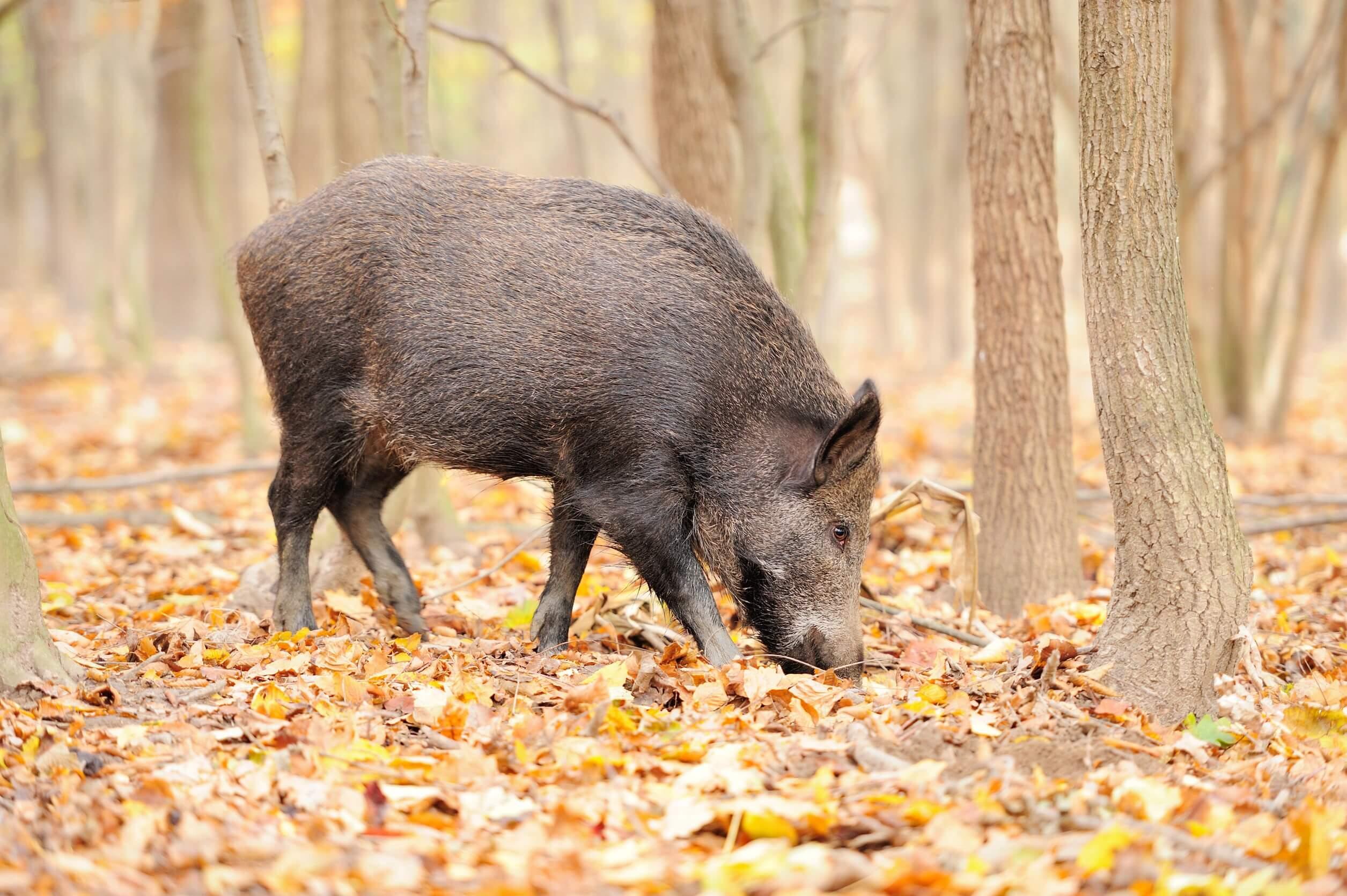 East Texas Hog Control Systems, LLC